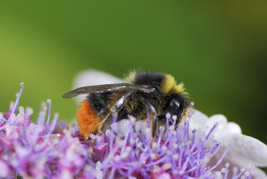 Bienen tragen dazu bei, dass wir Nahrung haben